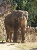 BL151028天王寺動物園5PA280008