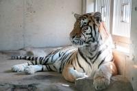 BL151028天王寺動物園6IMG_0226