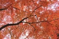 BL151210東京の紅葉1IMG_0468