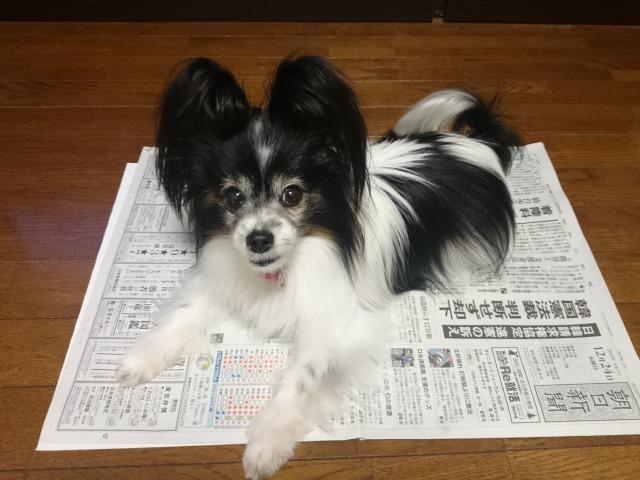 今度は新聞紙?-1