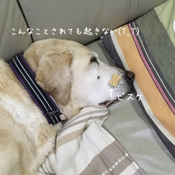 marubisuke.jpg