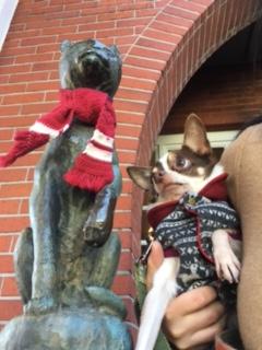 赤いマフラーの猫さん2