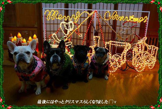 クリスマス華
