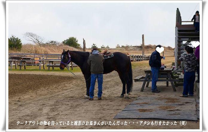 撮影のお馬さん