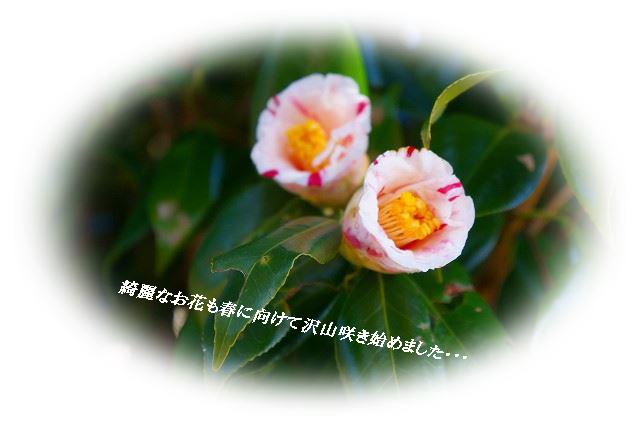 お花も咲き始めました