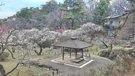 大倉山梅公園