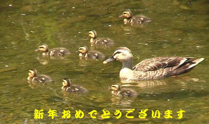 20160101-0 karugamo-oyak