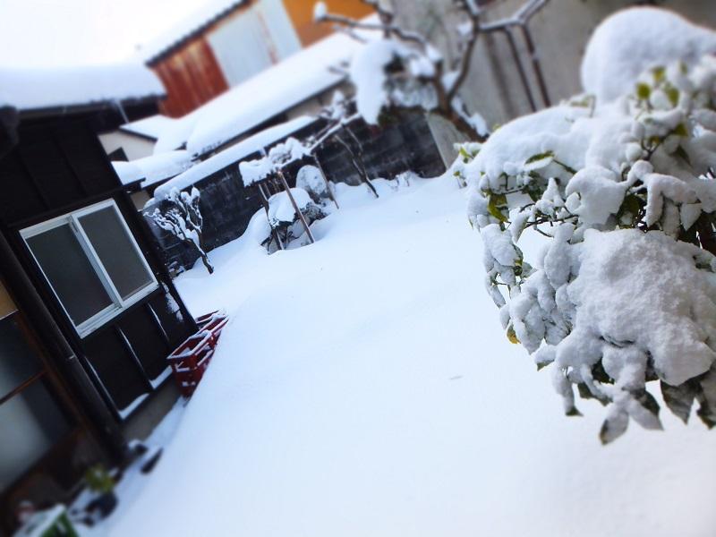 2016 大雪 中庭