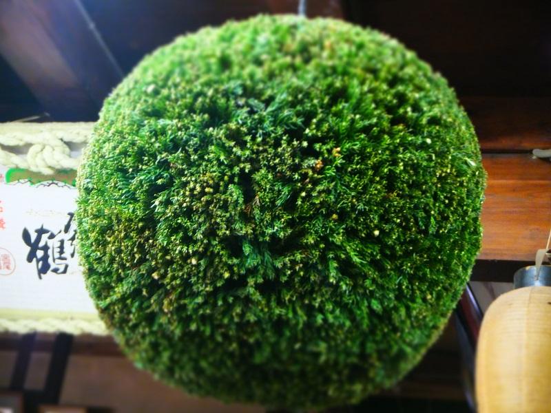 杉玉 緑 (1).