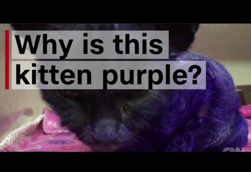 purple02.jpg