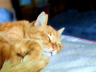 160224_3790今朝僕の布団で寝ていたトラ美ちゃんVGA