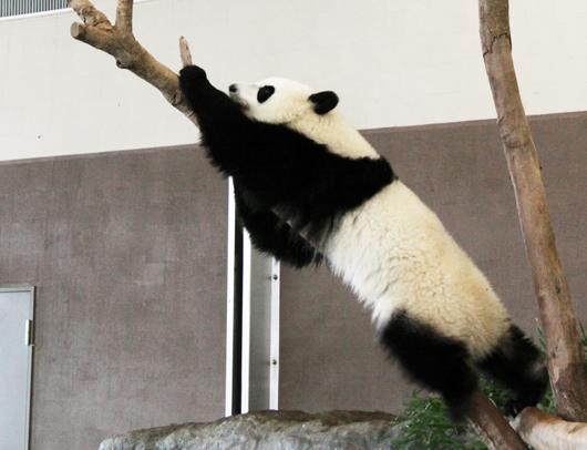 木登りは得意