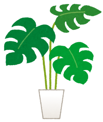 plant_monstera.png
