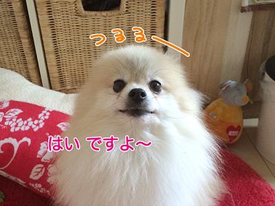 IMG_30777.jpg