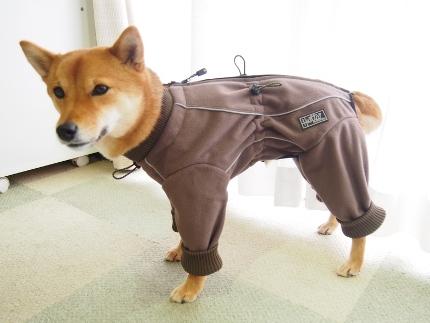 柴犬モコちゃん