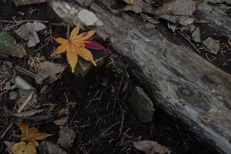 足下の紅葉