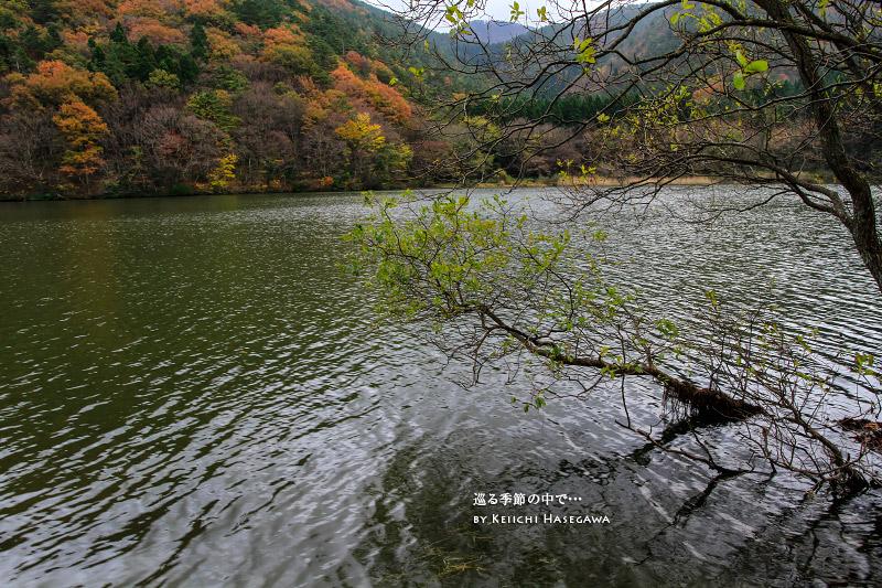 大山レイク 大野池