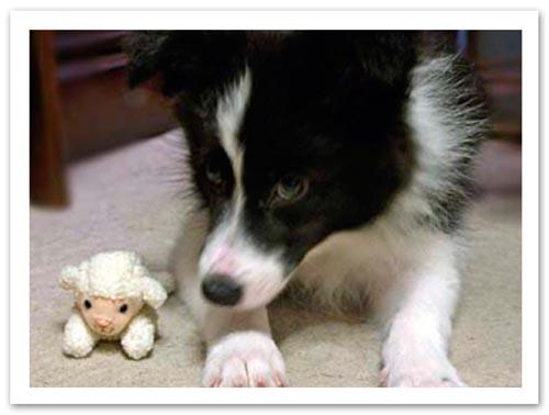 2005羊さんのおもちゃとVicky