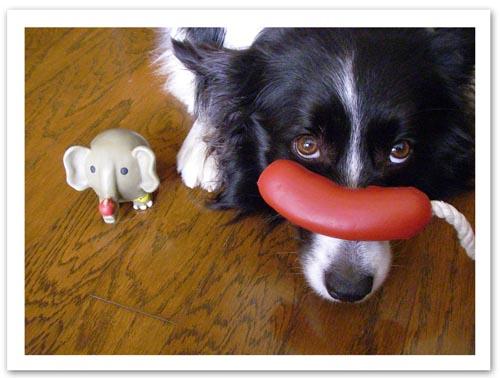 2009 ゾウさんのおもちゃとVicky