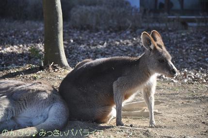 saitamazoo33.jpg