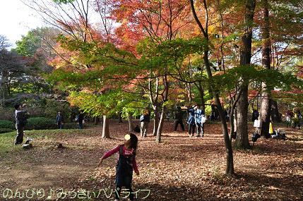 shinrinkoen20151111.jpg