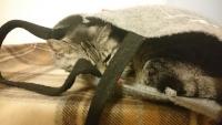 ふくろの中のネコ