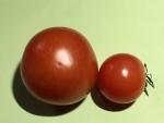トマト151218