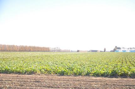 1十勝ビート収穫風景