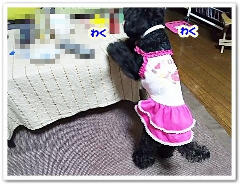 DSC_2889 (450x338)