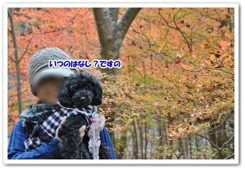 DSC_0038 (450x302)