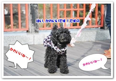 DSC_0010 (450x302)