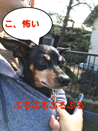 20151106-6.png