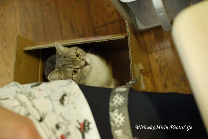 20151121まりん箱猫