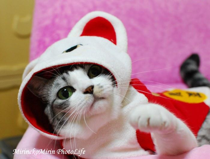 20091121招き猫にゃん