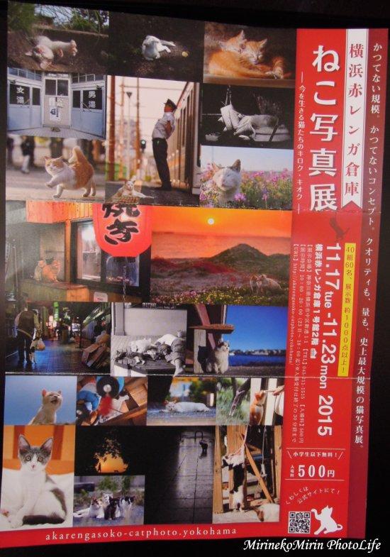 20151121ねこ写真展1