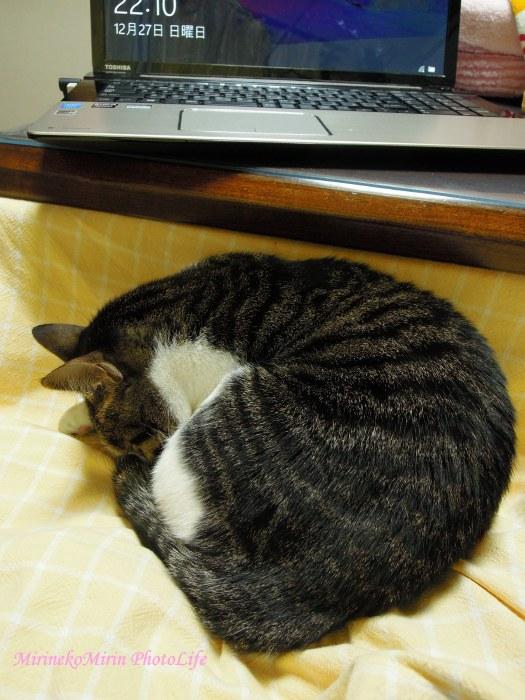 20151227ココお膝猫