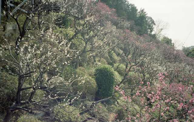 ikegami160227c35004.jpg