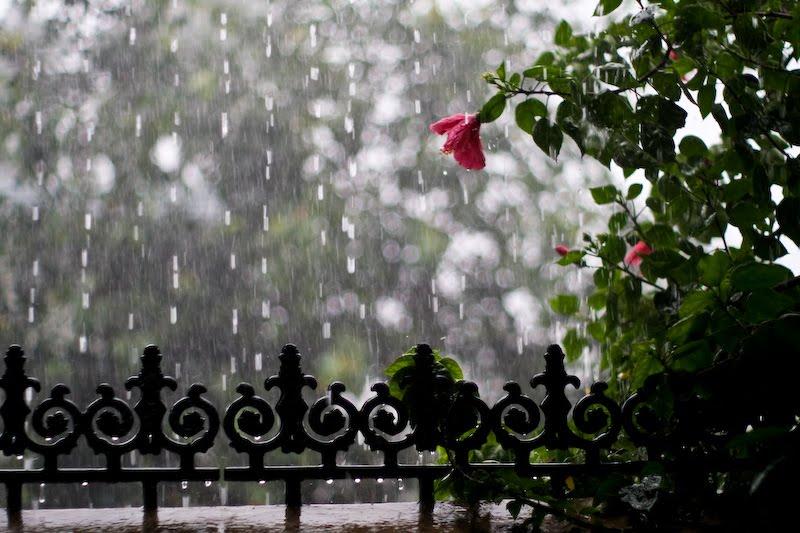 rain20.jpg