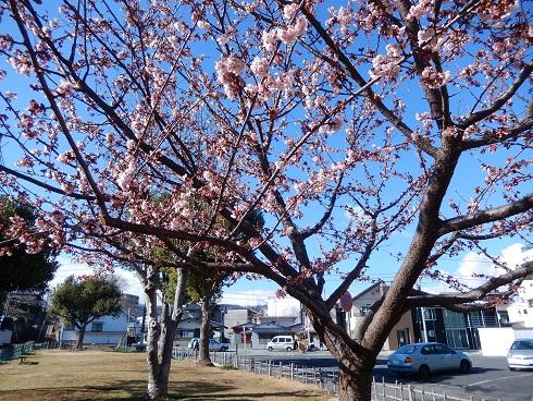 DSCN2960.jpg
