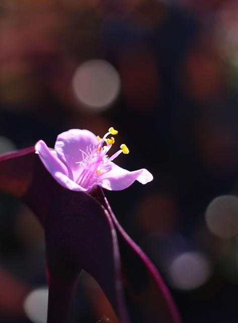 紫御殿 光の遊び 27.10.29