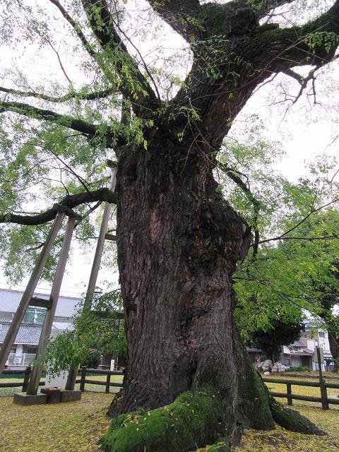 木の根元から少しカメラを上げて 27.11.18
