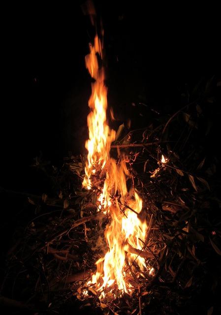 剪定したバベの枝を燃やす 28.1.12