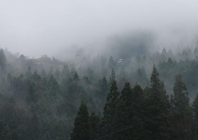 曇りの山 28.1.28