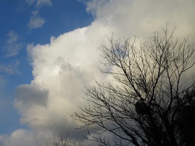 不思議な樹 28.2.27