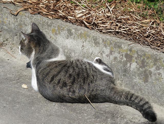 私以外の何かを見付けた猫 28.2.12