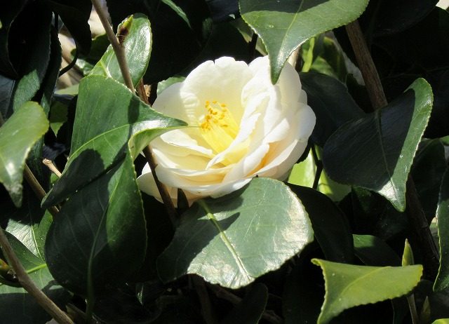 白椿花 28.2.29