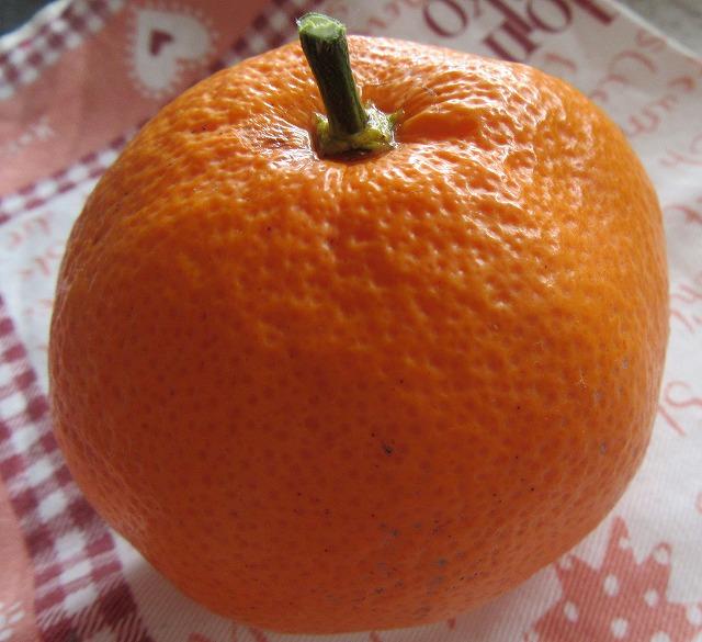 甘い美味しい蜜柑です 28.1.23