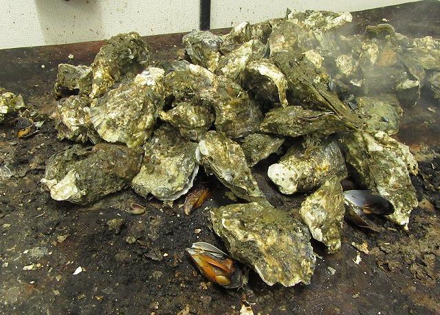 牡蠣は焼いてテーブルへ運ばれる 28.2.24
