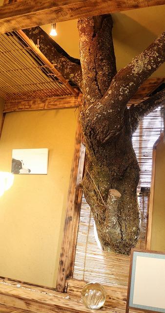 床柱は生の樹 27.12.21
