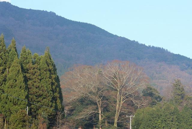 山々と樹 27.12.21
